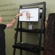 Rebel Chiropractic Symptoms Function